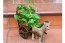 Tp. Hồ Chí Minh: Cây kiểng Topiary - Nét độc đáo của nghệ thuật CAT236_239