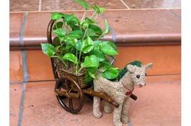 Cây kiểng Topiary - Nét độc đáo của nghệ thuật