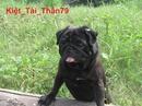 Tp. Hồ Chí Minh: Pug đen khẳng định một đẳng cấp CL1061405P9