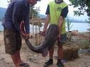 Tp. Hà Nội: Đặc sản cá lăng sông Mekong CL1095193P10