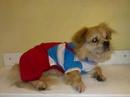 Tp. Hồ Chí Minh: Clothes for Dog ( Ao quan cho cun iu ) !!!!!! CL1061405P9