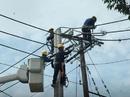 Tp. Hồ Chí Minh: Nhận thi công điện . 1/ Trung Thế & Hạ Thế . 2/ Hệ Thống Chiếu Sáng CL1022021