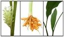 Tp. Hà Nội: tinh dầu củ nghệ tinh chất CL1012659