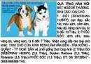 Tp. Hồ Chí Minh: Quà tặng năm mới bất ngờ dễ thương. Bán các loại chó. 1. SÓI (SEBERIAN HUSKY) CL1061405P9