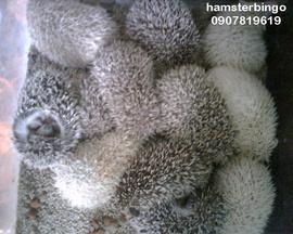 shop hamster pro