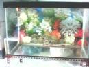 Tp. Hồ Chí Minh: Thanh lý bể cá 40 x 60 và nhiều đồ liên quan CL1062238P7