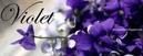 Bà Rịa-Vũng Tàu: Cửa hàng hoa tuơi violet - Chuyển phát điện hoa toàn quốc CL1019736