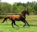 Tp. Đà Nẵng: Chúng tôi đang nuôi 2 con ngựa ở trang trại, nay chúng tôi bán trang trại CL1203541P11