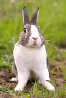 Tp. Hồ Chí Minh: Tôi bán đủ loại thỏ như thỏ thịt, thỏ con thỏ giống với nhiều chủng loại CL1203541P10