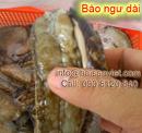 Tp. Hồ Chí Minh: Mua bán Bào ngư (Abalone) CL1110253P6