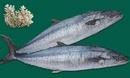 Kiên Giang: Chuyên bán các loại hải sản phú quốc : như cá thu, mực ống , mực lá. v.v CL1110253P1