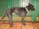 Tp. Hồ Chí Minh: Tặng ACE thích nuôi chó PQ 1 chó đực đen tuyền, hơn 1 năm tuổi, chỉ nhận lại tiền CL1029045