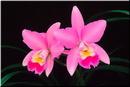 Tp. Hồ Chí Minh: Tranh đá quý ngọc việt art sắc màu tạo hóa nơi cảm xúc thăng hoa. CL1090106P3