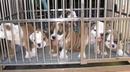 Tp. Hồ Chí Minh: Bán chó rottweiler hai tháng sổ lải trích ngừa đầy đủ chó đẹp thuần chủng CL1029045