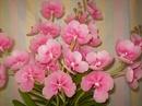Tp. Hồ Chí Minh: Dạy làm hoa đất, hoa đất sét giá rẻ, vcd hướng dẫn làm hoa đất... CL1028865