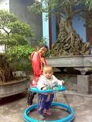 Tp. Hà Nội: Gia đình tôi cần bán cây sanh do gia đình tôi tự trồng và chăm sóc CL1070908P6