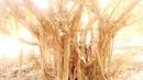Tp. Hà Nội: Bán 2 cây xanh, gốc to, tán đẹp, giá thỏa thuận. CL1070908P6