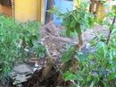 Tp. Hồ Chí Minh: cay canh can ban CL1035979