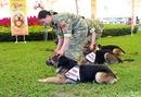 Bình Dương: Nhận huấn luyện, mua bán, phối giống và điệu trị bệnh cho các loại chó nghiệp vụ CAT246P9