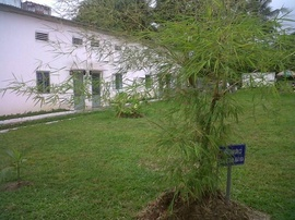 Cho thuê nhà nguyên căn đẹp, rất thoáng mát nằm trong khu CC yên tĩnh có sân vườn