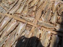 Bình Thuận: Cung cấp Cá Mối khô cho Cty xuất khẩu. CL1017041