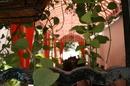 Tp. Hồ Chí Minh: Nhà hàng nằm tại một biệt thự cổ xưa gần 100 năm. Những chậu hoa được làm cả 100 CAT246_256_316