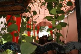 Nhà hàng nằm tại một biệt thự cổ xưa gần 100 năm. Những chậu hoa được làm cả 100