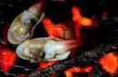 Tp. Hồ Chí Minh: Hải sản tươi sống ỐC VÒI VOI (TU HÀI) – Gía tốt, chất lượng CL1057584P7