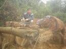 Quảng Nam: Bán gỗ tròn Chủa ( trám đinh ) , Chò , Dỗi Hương , Dầu CL1062238P7