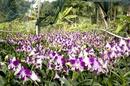 Tp. Hồ Chí Minh: Sang Vườn Lan CL1087434P6