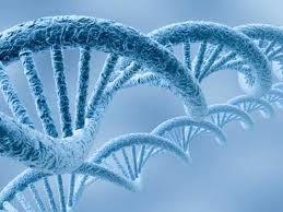 Cung cấp thiết bị phòng thí nghiệm, hóa chất sinh học phân tử, nuôi cấy mô, ...