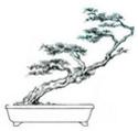 Tp. Hà Nội: Bán cây cảnh số lượng lớn, cây cổ thụ, cây niên đại cao, lũa CL1064771