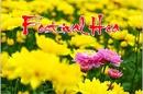 Tp. Hồ Chí Minh: Tour Festival hoa Đà Lạt 2012 CL1019555