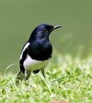 Tp. Hà Nội: Hiện nay tôi đang có nhu cầu bán 1 số loại chim tự nhiên sưu tầm tại quê hương CL1075778