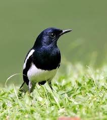 Hiện nay tôi đang có nhu cầu bán 1 số loại chim tự nhiên sưu tầm tại quê hương
