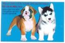 Tp. Hồ Chí Minh: Hiện đang có bán chó Siberian Husky (đực + cái), Chihuahua, phốc sóc, Bulldog CL1072522
