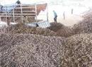 Tp. Hồ Chí Minh: Cần bán bã mì khô, bã mì nghiền giao hàng tận nơi bảo đảm chất lượng CL1064649