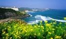 Tp. Hồ Chí Minh: Tour vip Hàn Quốc jeju miễn phí. CAT246_255