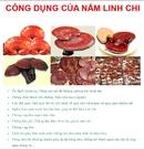 Tp. Hồ Chí Minh: Linh chi đỏ, giá rẻ, thuốc bổ, giải độc, trị ung thư, bệnh tiểu đường-0982824949 CL1083722