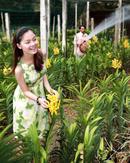 Tp. Hà Nội: Ebi. vn - Sophilita mừng giáng sinh và năm mới 2012 CAT18P9
