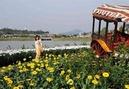 Tp. Hồ Chí Minh: Khám phá Lễ Hội Hoa Đà Lạt 2012, giá cực rẻ, chỉ co tại SAVACO TOURIST CAT246_255_305