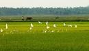 Tp. Hồ Chí Minh: Nhà Máy Với Công Suất Sản Xuất 100Tấn Gạo/ Ngày - Tìm Các Đối Tác Có Nhu Cầu Lớn CL1086649P8