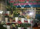 Tp. Hồ Chí Minh: Dạy cắm hoa tươi CAT12_32