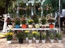 Tp. Hồ Chí Minh: Hoa Ly Chậu Đà lạt tết Vườn nhà , Giá gốc , Giao hàng tận nơi. CL1088805