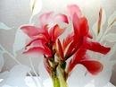 Tp. Hồ Chí Minh: Tranh khắc kính nghệ thuật đẹp CL1097895