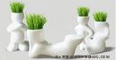Tp. Hồ Chí Minh: Cỏ tóc tình nhân - Quà tặng ý nghĩa mùa Valentine CL1128117P11