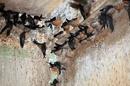 Tp. Đà Nẵng: Tìm đối tác hợp tác và chuyển giao công nghệ nuôi chim yến lấy tổ - Yến sào CL1090470P4