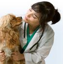 Tp. Hà Nội: Phòng khám thú y ở hà nội Chữa bệnh cho chó Chữa bệnh cho cho mèo RSCL1089874