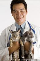 Tp. Hà Nội: Chữa bệnh cho thú cảnh, ch ó cảnh RSCL1089874