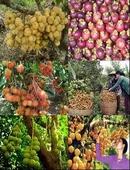 Tp. Hồ Chí Minh: Trái cây Chợ Lách CL1110253P6